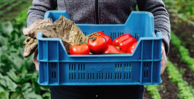 persoon houd blauwe krat met groente vast