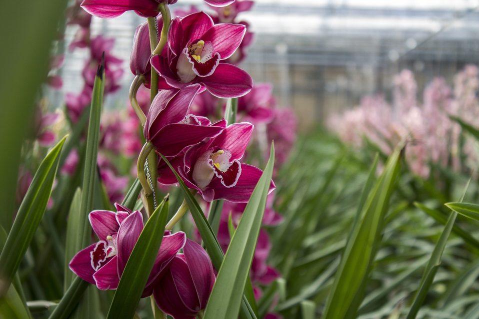 rozen orchidee